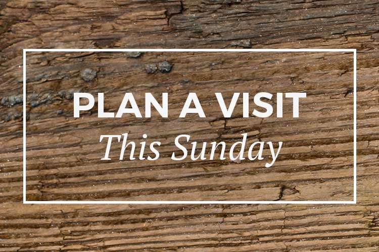 Plan a visit this Sunday